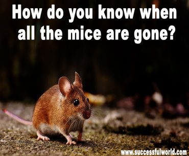 How do you know when all the mice are gone