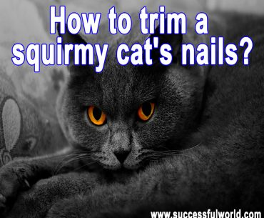 How to trim a squirmy cat's nails