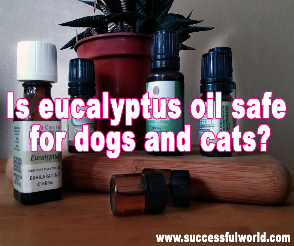 Is Eucalyptus Oil Safe For Dogs And Cats Safety Tips